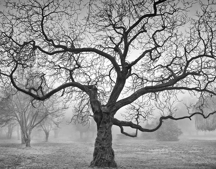 Tree in Fog | Lawrence Hislop Photography