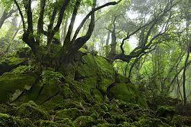 Il bosco monumentale del sasseto si estende sotto il castello di Torre Alfina lungo un percorso roccioso ai piedi di alberi secolari