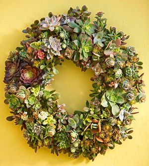 Make a Succulent Wreath To hang on a door, use a a centerpiece, decorate any space with living color!