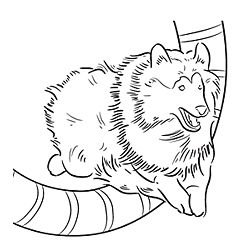sheep and dogs coloring pages - photo#36