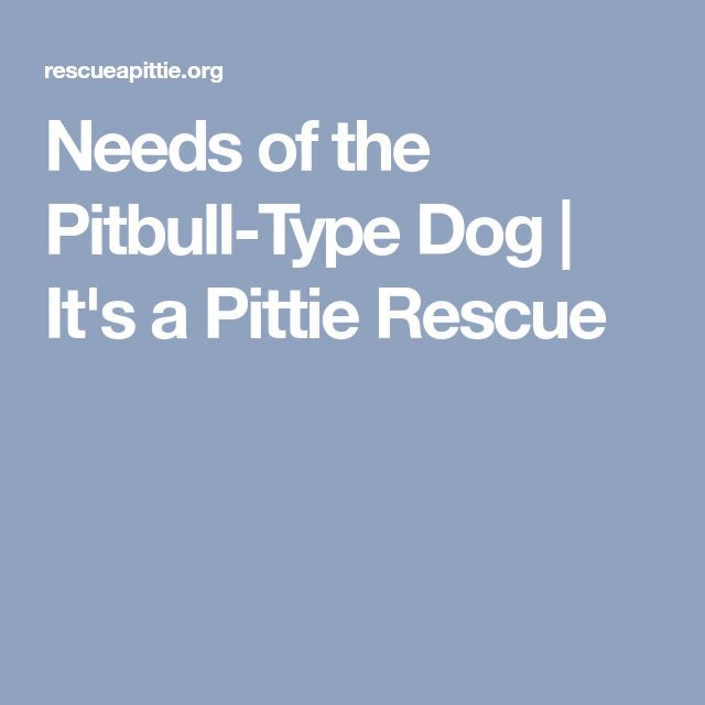 Needs of the Pitbull-Type Dog   It's a Pittie Rescue