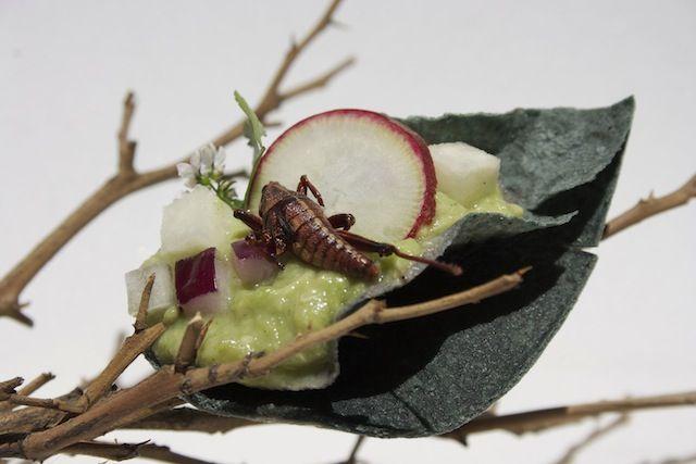 Te presentamos en la pág.16 la receta de los chapulines con guacamole, gastrosofia.net
