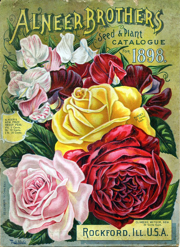 Sweet Pea + Roses  Vintage Seed Packet #vintagelettering