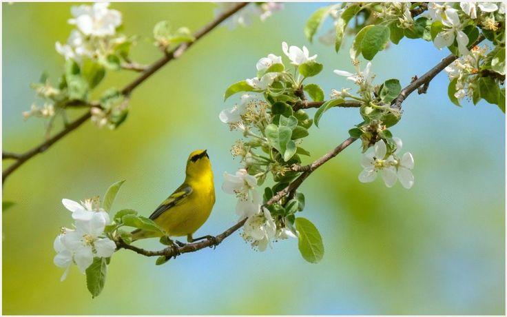 Картинки по запÑ€осу birds in flowers