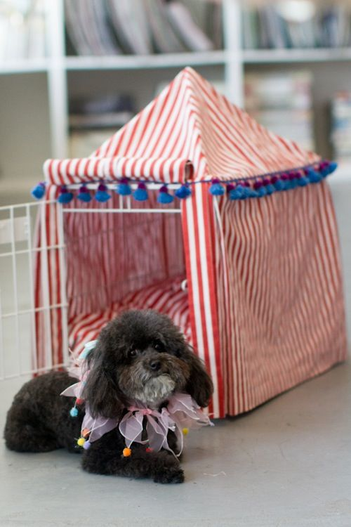 I can't stand how cute this is. Seriously. DIY Circus Tent Dog Kennel Cover!