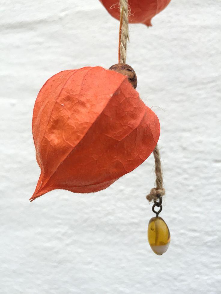 Physalis alkekengi  / Japansk Lygte med perler på snor