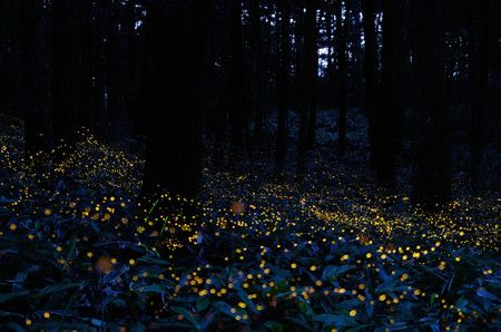 Come fotografare le lucciole - Fotografare in Digitale