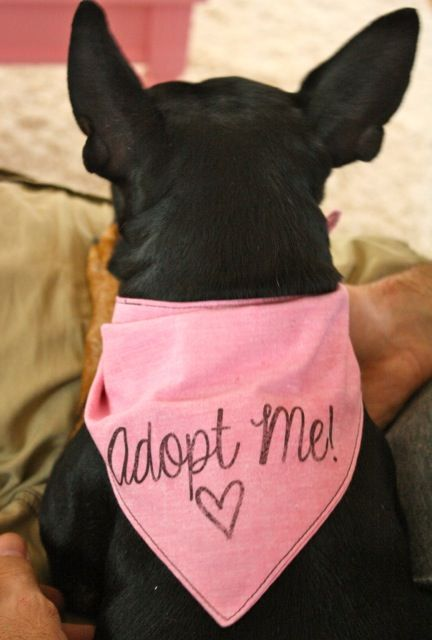Gertie's New Blog for Better Sewing: Tutorial: Make a Kerchief for a Shelter Dog in Need