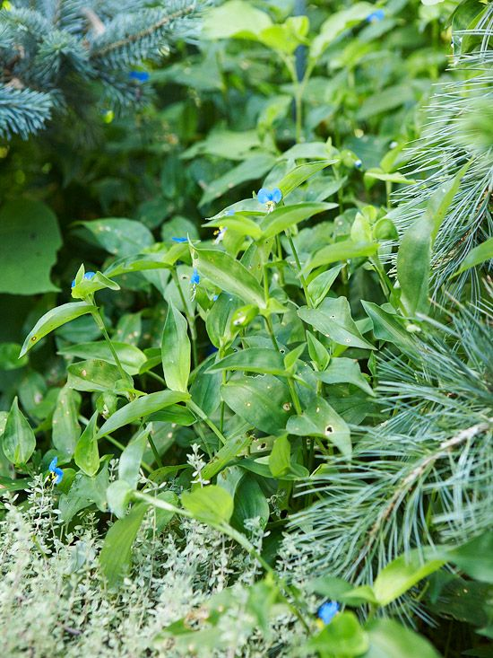 Is It A Weed Or Plant This Bhg Guide Makes Easy To Identify