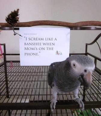 I scream like a banshee when mom's on the phone. #shaming #shame