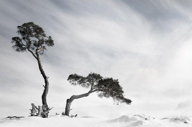 Dutch Winter - by Liesbeth van Asselt