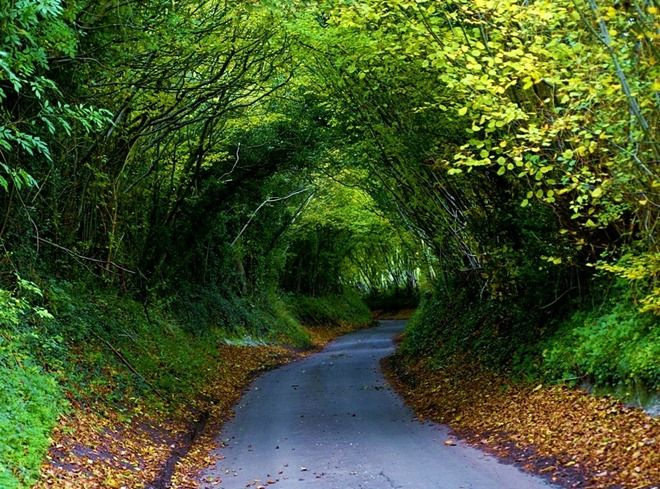 i would really like to take a walk through that!