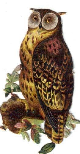 Victorian Die Cut Scrap Hoot Owl on a Branch c1880s: