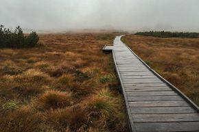 Der Mummelsee-Hornisgrindepfad ist reich an Highlights: Traumhafte Aussichtspunkte, der mystische Mummelsee und ein Bohlenweg durch das Hochmoor.