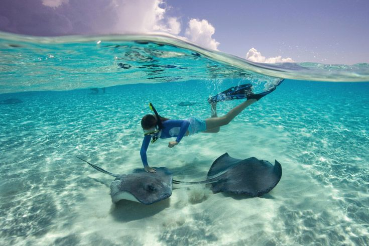 Half Moon Cay snorkel with Sting Rays