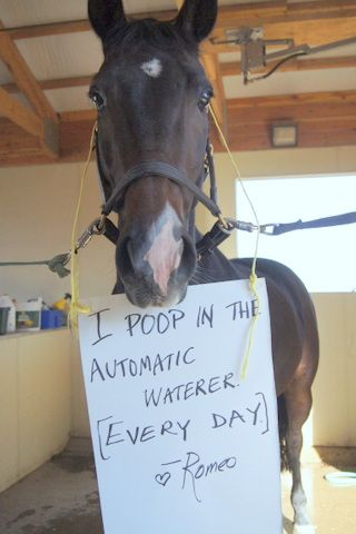 9. I poop in the automatic waterer (every day).