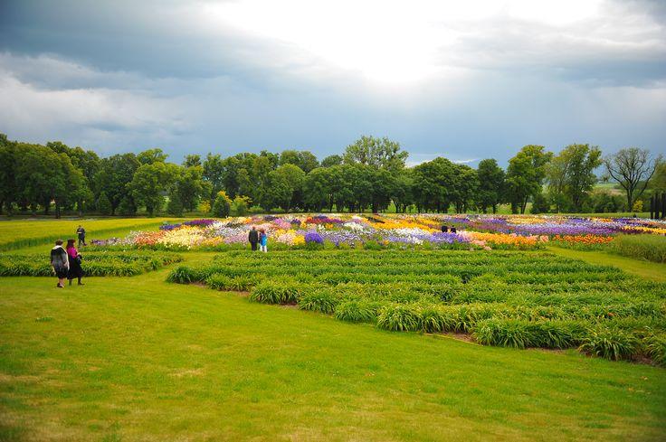 Les champs d'iris et la plantation de lys-hémérocalles qui fleurit en automne