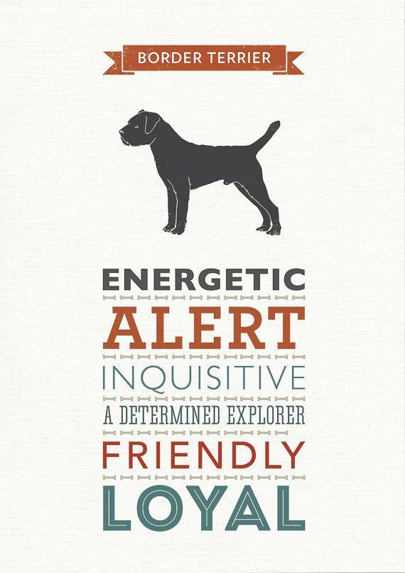 Border Terrier Dog Breed Traits Print Border Terrier Gift