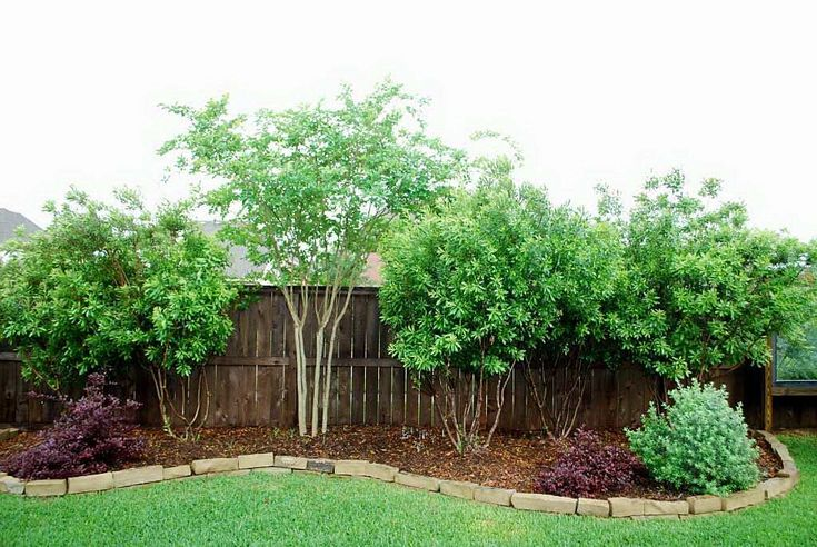 texas wax myrtle arrangement | Privacy landscaping ...