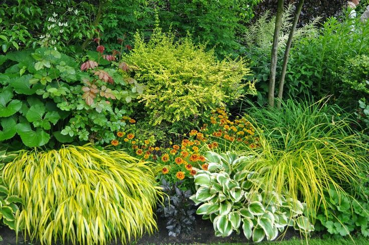 Gold lights up the shade kathleen de sy shade plants for Low maintenance shade garden