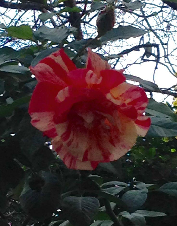 """""""Exotica rosa"""" by Mariano Morassut"""