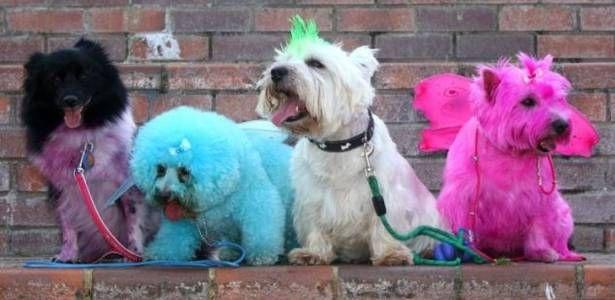 Inglesa pinta o pelo de seus cães para homenagear estrelas de reality show - Notícias - UOL Notícias