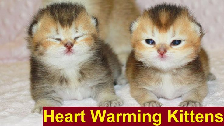These kittens Must Warm Your Heart – Hungry Kittens want Food | Adorable...