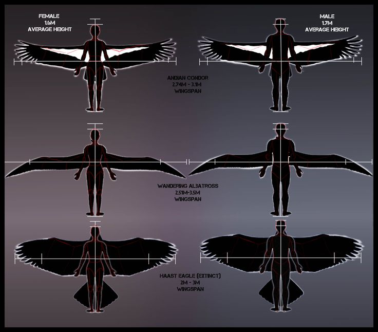The Haast Eagle, The Condor and the Albatross' Wingspan in comparison to the average human height (1.6/1.7M)