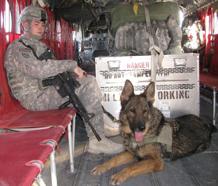 German Shepherd Military War K9 Hero & Hero Handler - https://upload.wikimedia.org/wikipedia/commons/7/75/US_Army_52839_Dog_and_handler_flying_high_over_Afghanistan.jpg
