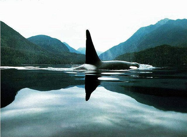 Have always been fascinated with killer whales