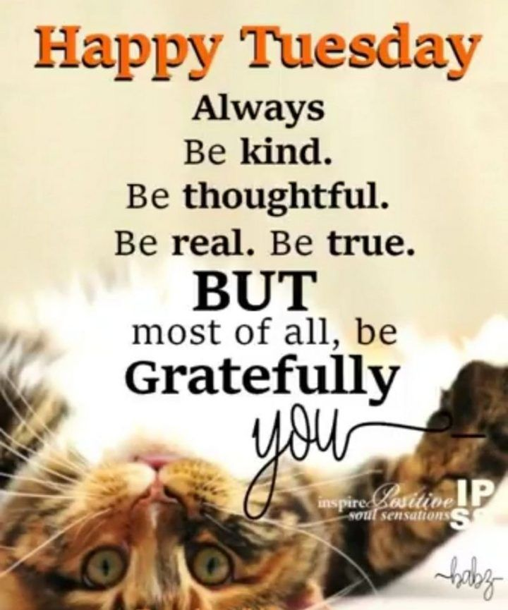 Happy Tuesday Funny Images : happy, tuesday, funny, images, Funny, Tuesday, Quotes, Images, Inspirational, Messages, Happy, Quotes,, Morning,