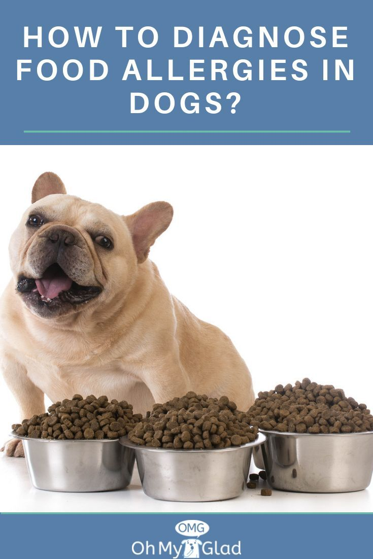 What Dog Owners Ought To Know About Dog Food Allergy Diet Signs