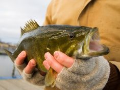Bass Fishing Technique That Has Worked Well For Me Many Situations - http://bassfishingmaniacs.com/bass-fishing-technique-that-has-worked-well-for-me-many-situations/