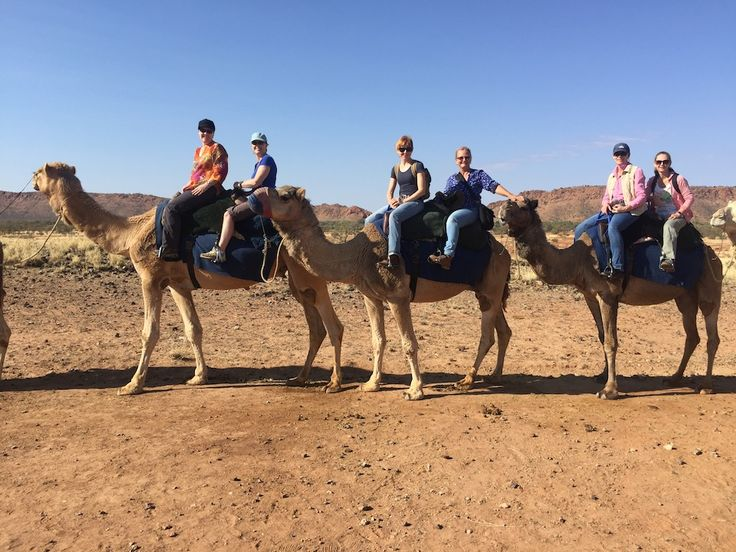 The CDCS Team camel adventure in outback #AliceSpringsNT