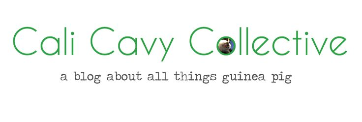 Cali Cavy Collective: a blog about all things guinea pig: How to Grow Wheatgrass Indoors for your Guinea Pigs