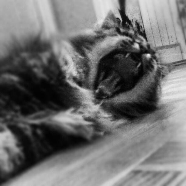 Yawning Sven!