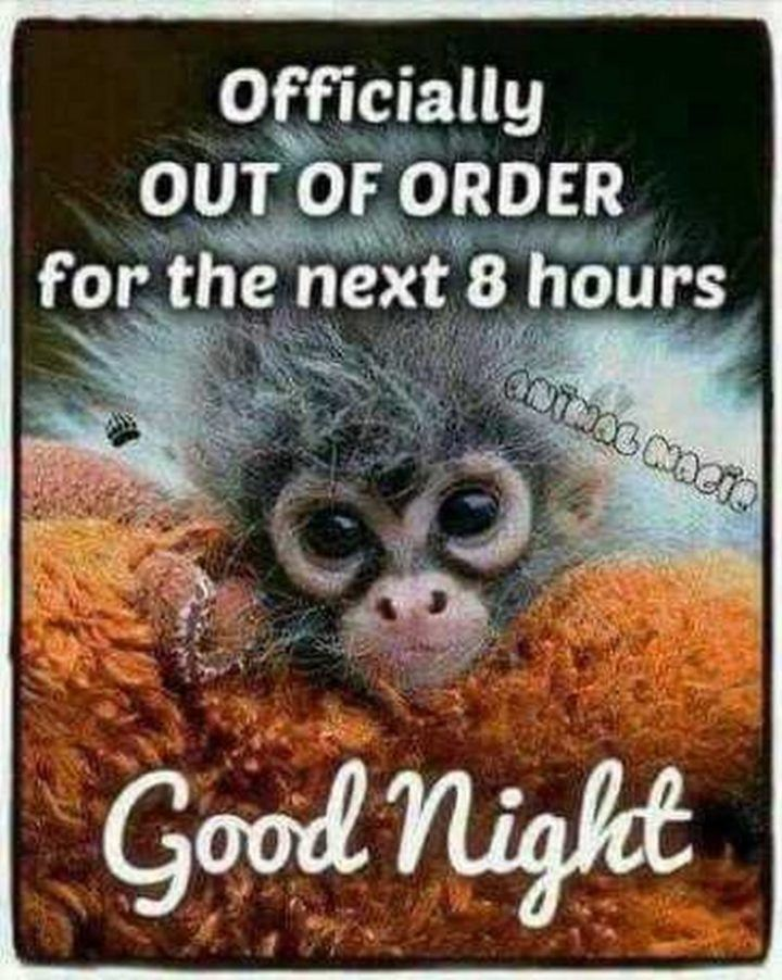 101 Good Night Memes for When You Want Funny Goodnight Wishes | Funny good night quotes, Good night funny, Good night quotes