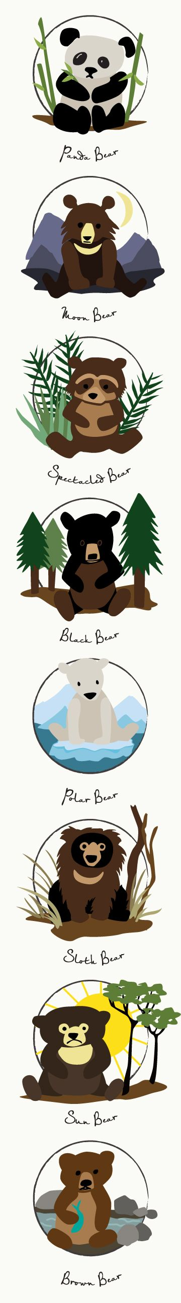 Ursidae Poster featuring all 8 species of bear by Daughter Earth (Panda, Moon Bear, Spectacled Bear, Black Bear, Polar Bear, Sloth Bear, Sun Bear, Brown Bear)   What about Kodiak and Grizzly Bear? Both are subspecies of Brown Bear. And Koalas? They are Marsupials.