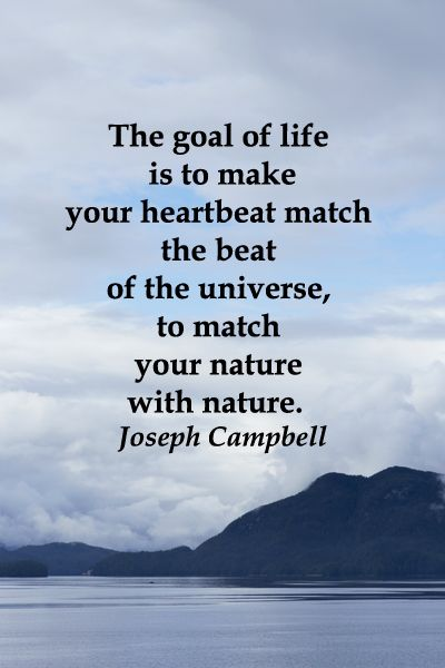 """""""The goal of life is to make your heartbeat match the beat of the universe, to match your nature with nature.""""  Joseph Campbell -- On image taken from ALASKA MARINE FERRY --Explore a fun-filled, nature-rich strategy to build your learner's naturalist intelligence -- http://www.examiner.com/article/build-your-learner-s-naturalist-intelligence-through-wildlife-s-expressive-eyes"""