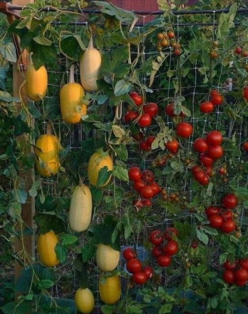 http://homestead-and-survival.com/101-gardening-secrets-the-experts-never-tell-you/