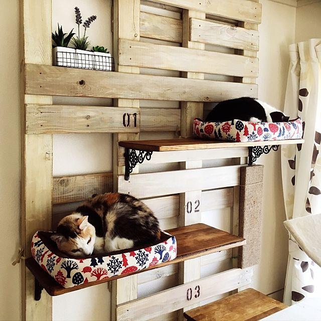 猫と暮らす リビングのキャットウォーク タワーdiy実例 リビング 猫 猫と暮らす キャットタワー