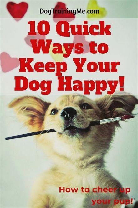 Dog Training Des Moines Dog Training Zip Lines Dog Training