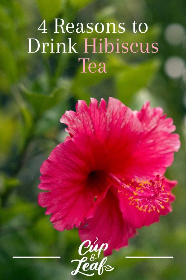 4 Reasons To Drink Hibiscus Tea With Images Hibiscus Tea