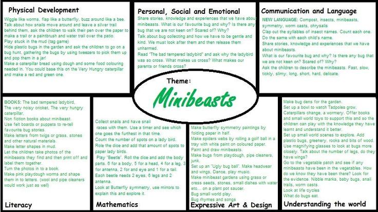 Minibeasts EYFS medium term plan