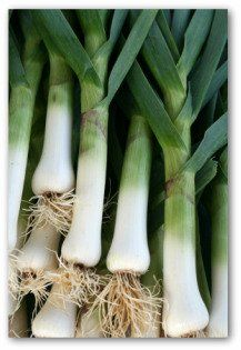 How to grow and harvest leeks