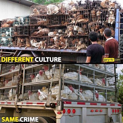 Different culture. Same crime. - abuse, cruelty, slaughter