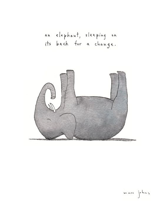 Poster | AN ELEPHANT SLEEPING ON von Marc Johns | more posters at http://moreposter.de