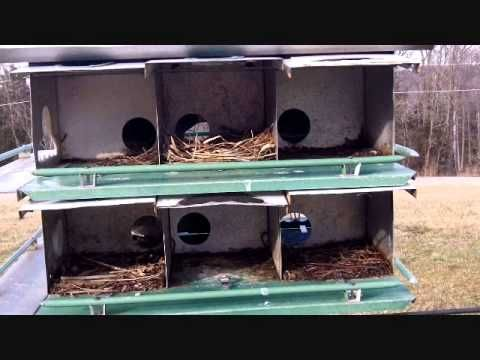 How to make Purple Martin rooms larger, and Why.  Purple Martin Conservation Assn. YouTube Channel