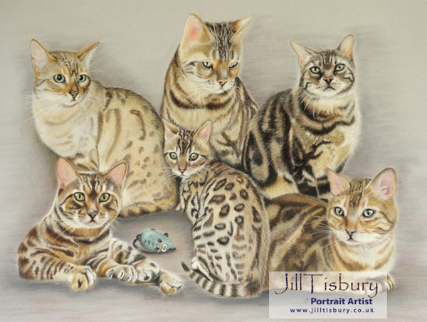 Six bengals in one place lol Now how did that happen.  Pastel on Velour: commission