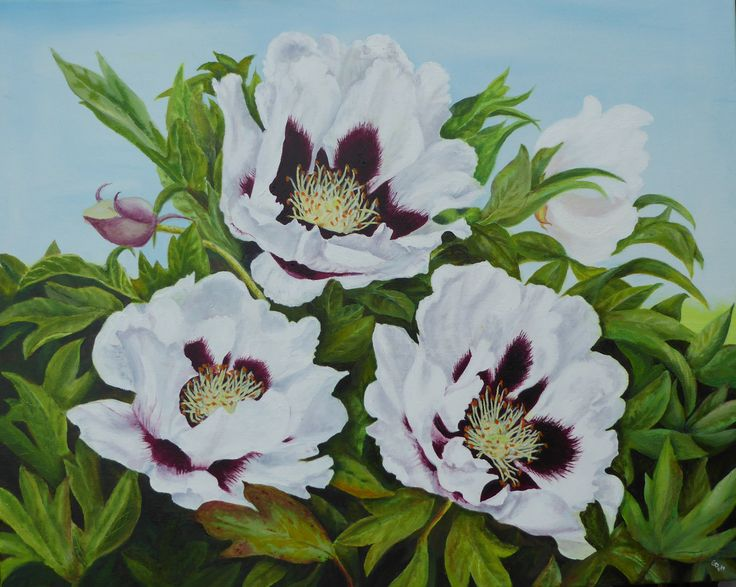 Tree peonies at Aberglasney; oil on canvas by Gorica Bulcock